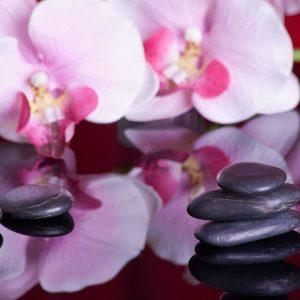 Lavastenar på spegelblank yta och rosa vackra blommor.